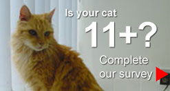 Is your cat 11+?