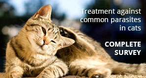 Treatment against common parasites in cats - COMPLETE SURVEY